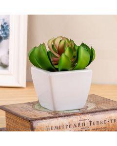 Cactus com Pote Concepts Life - Branco