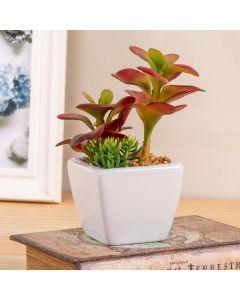 Cactus com Pote Decorado 15cm Concepts Life - Branco