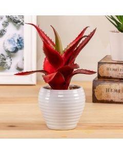 Planta com Pote Decorado 22cm Concepts Life - Branco