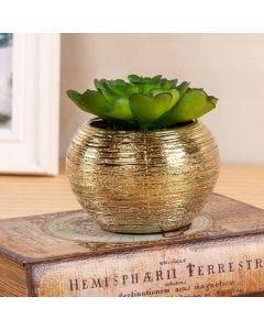 Vaso Decorativo Suculenta 10cm Concepts Life - Sedum